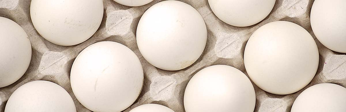 Egg Marketing Banner Photo